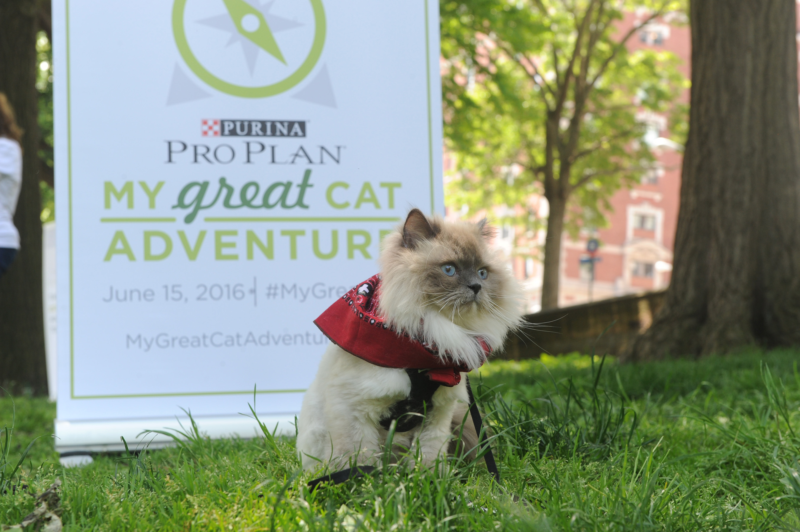 "Purina Pro Plan and Adventure Cats proclaim June 15 as National ""Take Your Cat On An Adventure"" Day to inspire cat owners to be more adventurous. (Diane Bondareff/AP Images for Purina Pro Plan)"