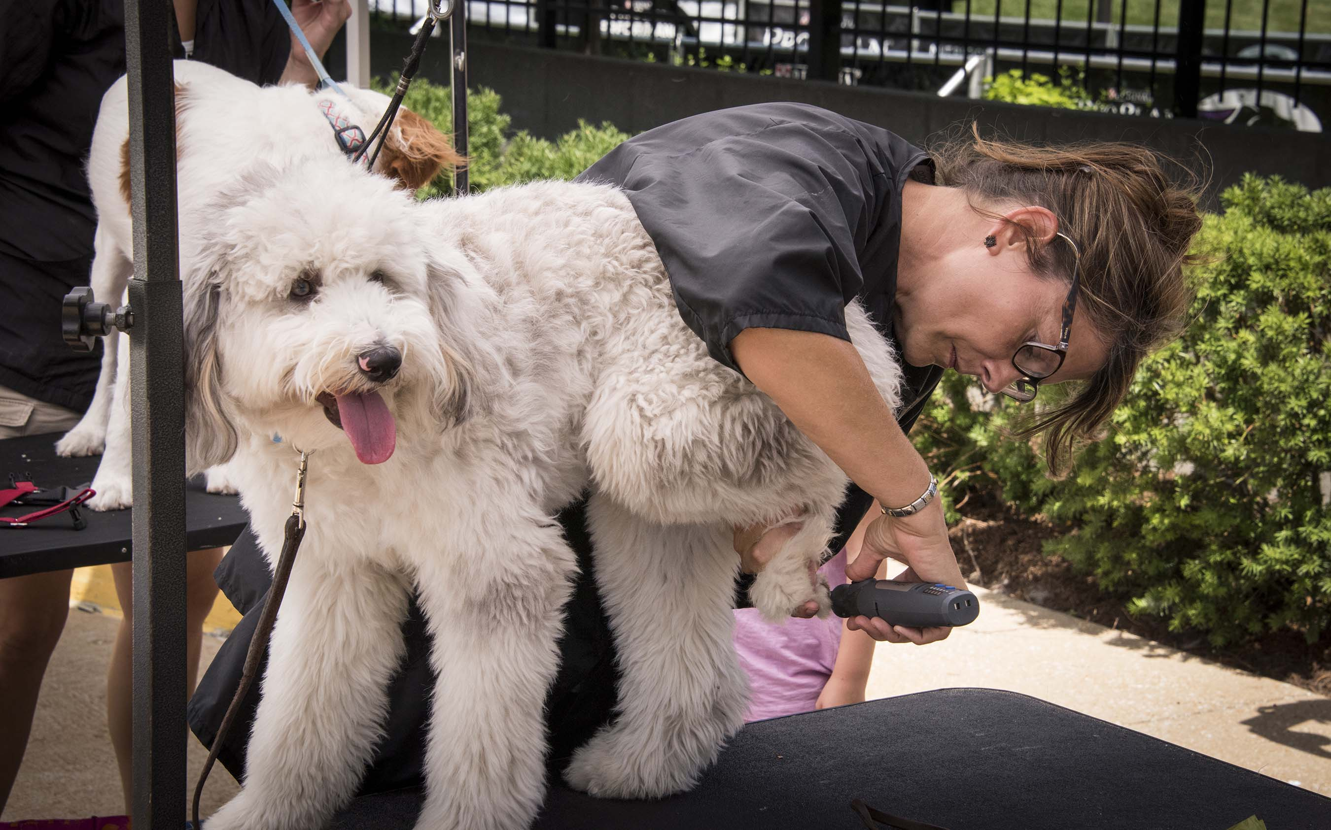 Purina helped celebrate #petsatwork with fun activities at the Purina headquarters in St. Louis such as puppy portraits, mobile grooming and a Yappy Hour for associates and their pets
