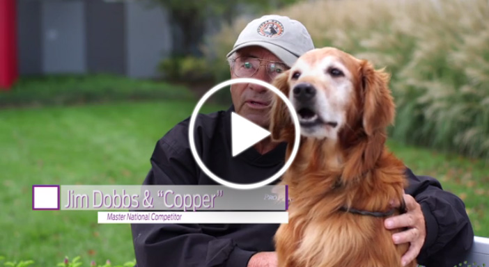 Nutrition for Older, Active Dogs