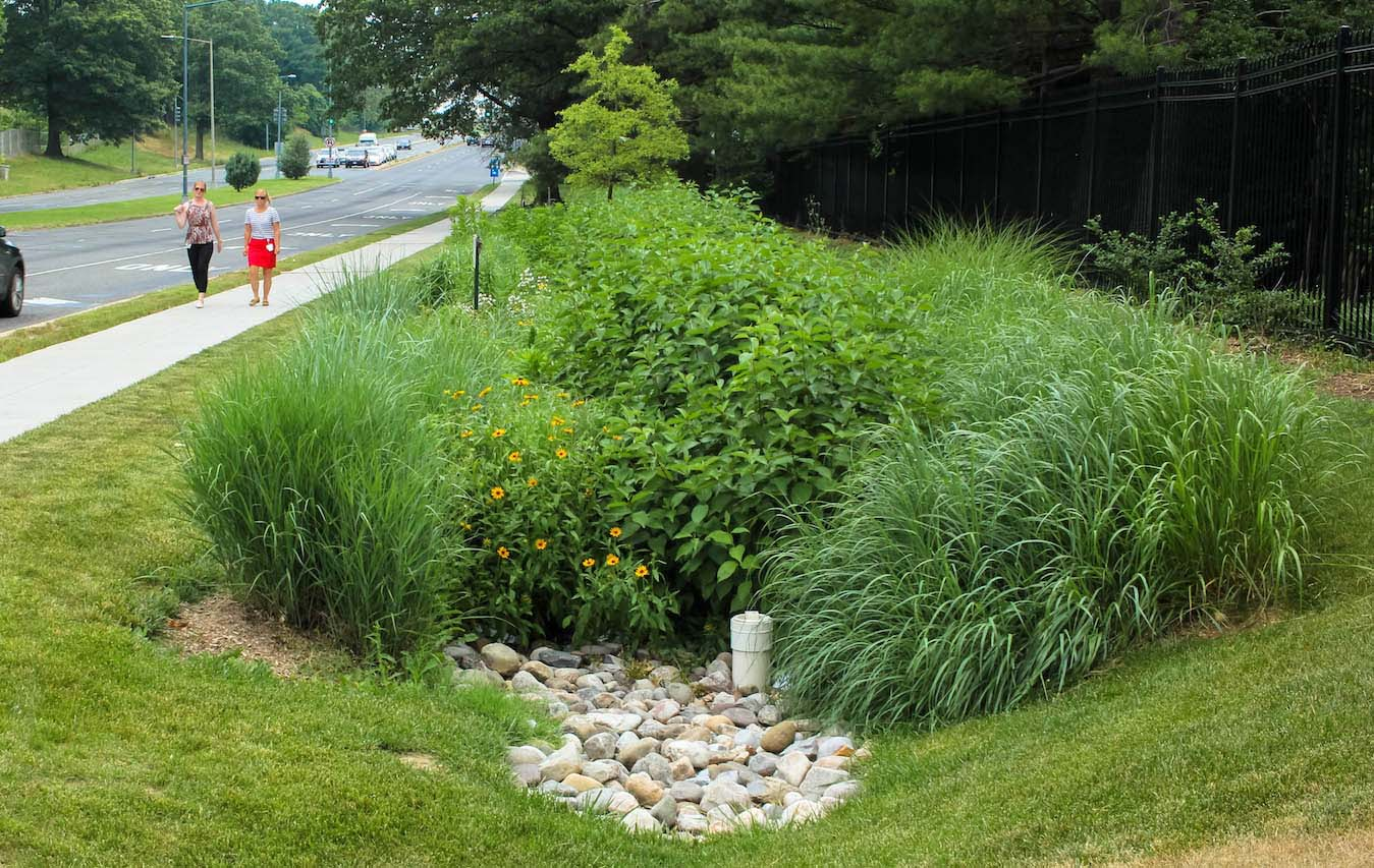 Green infrastructure mimics nature to absorb stormwater.