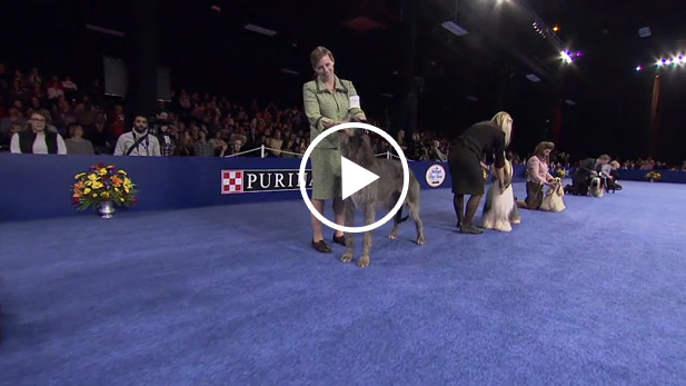 For the second year in the row, Johnny Weir is partnering with Purina to kick off Purina's #DogThanking movement to celebrate Thanksgiving and the National Dog Show Presented by Purina.