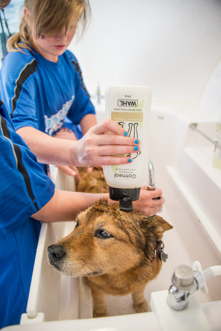 The Bathe to Save Tour is powered by Wahl's all-natural pet shampoos.