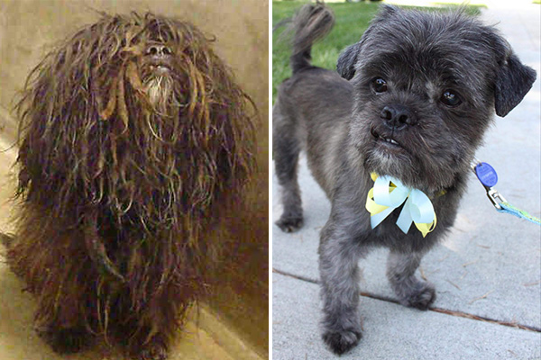 America's Top Dogs: 10 Most Amazing Shelter Dog Makeovers
