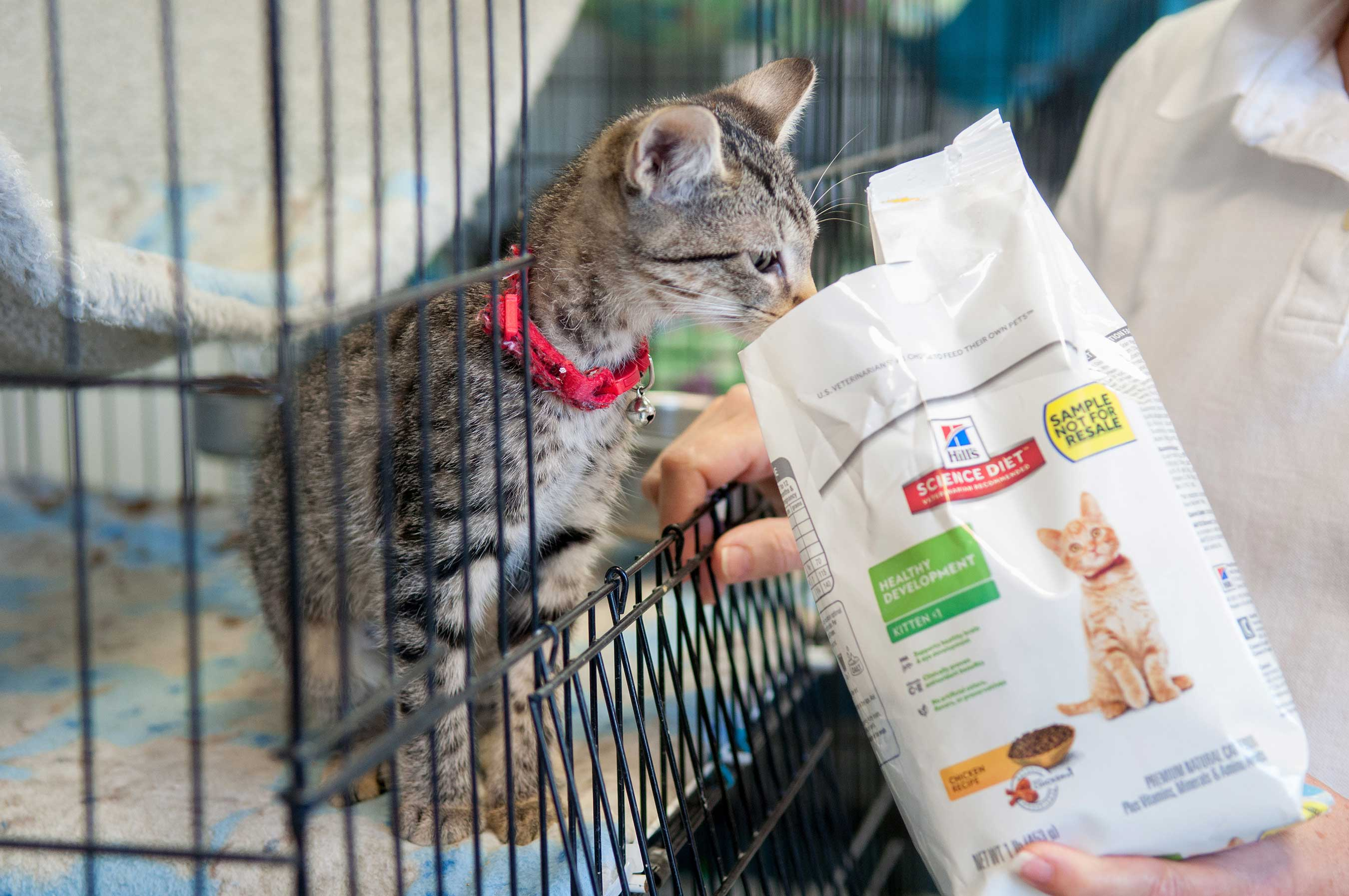 A rescued kitten in Louisiana is ready to eat cat food donated by the Hill's Food, Shelter & Love® program.
