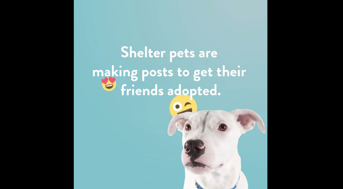 National Adopt A Shelter Pet Day