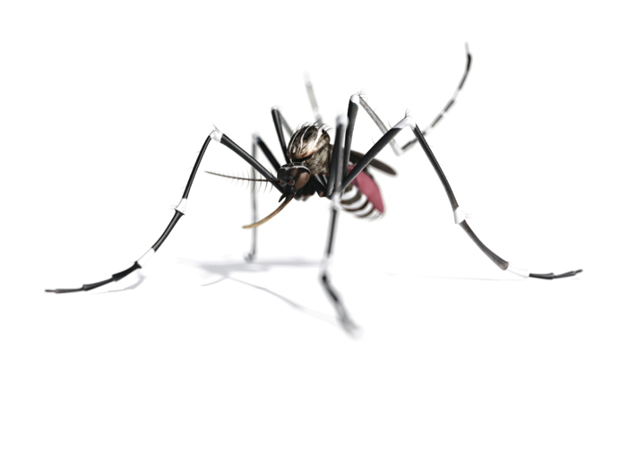 TruGreen Mosquito Defense™ targets pests where they live