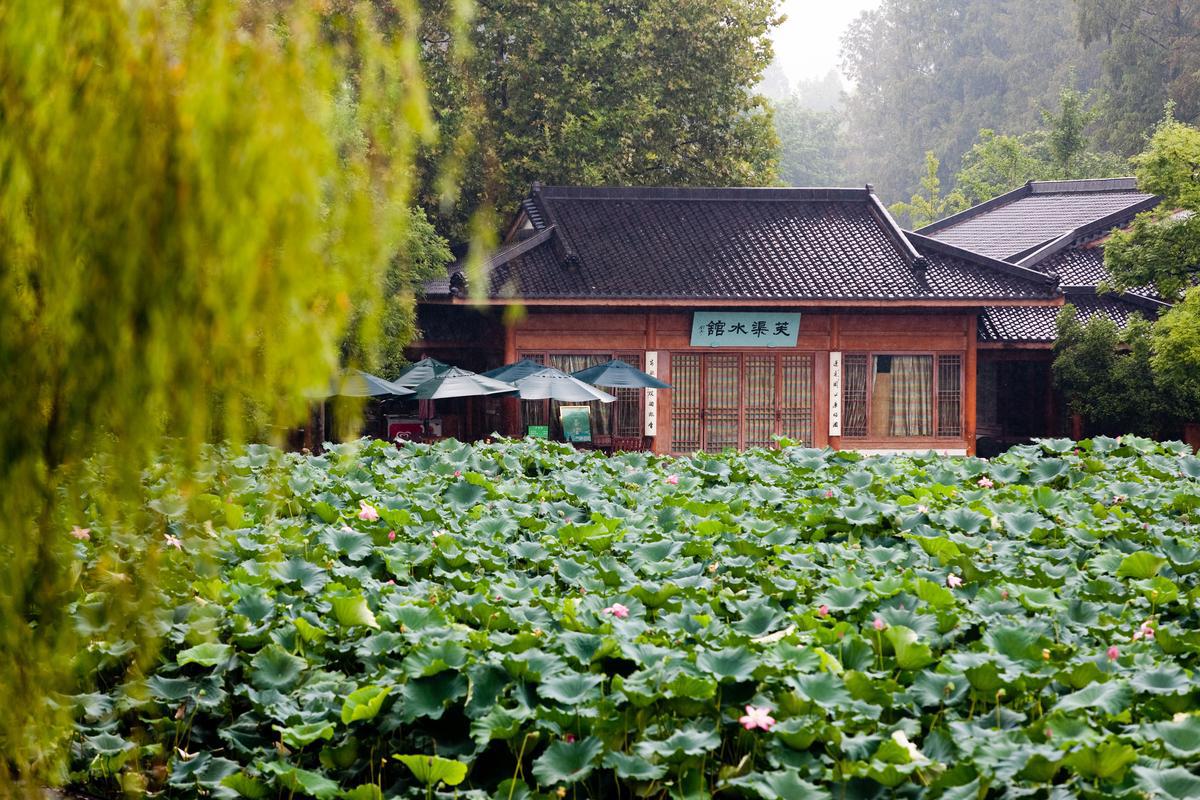 Lotus pond in summer Hangzhou