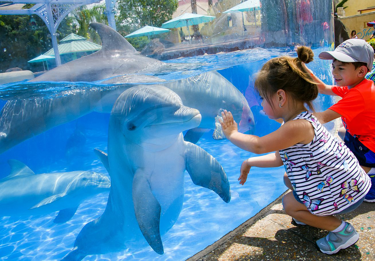 Young visitors Valentina Serrano and Mateo Serrano get up-close to bottlenose dolphins at SeaWorld Orlando's Dolphin Nursery. Photo Courtesy of: SeaWorld Parks & Entertainment