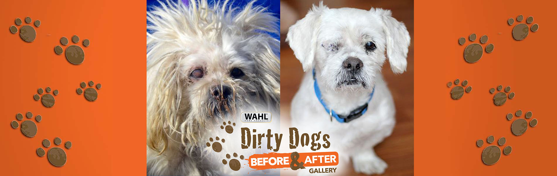 A before and after shot of a small dog. The left side shows a very hairy disheveled dog and the right side shows a well-groomed dog.