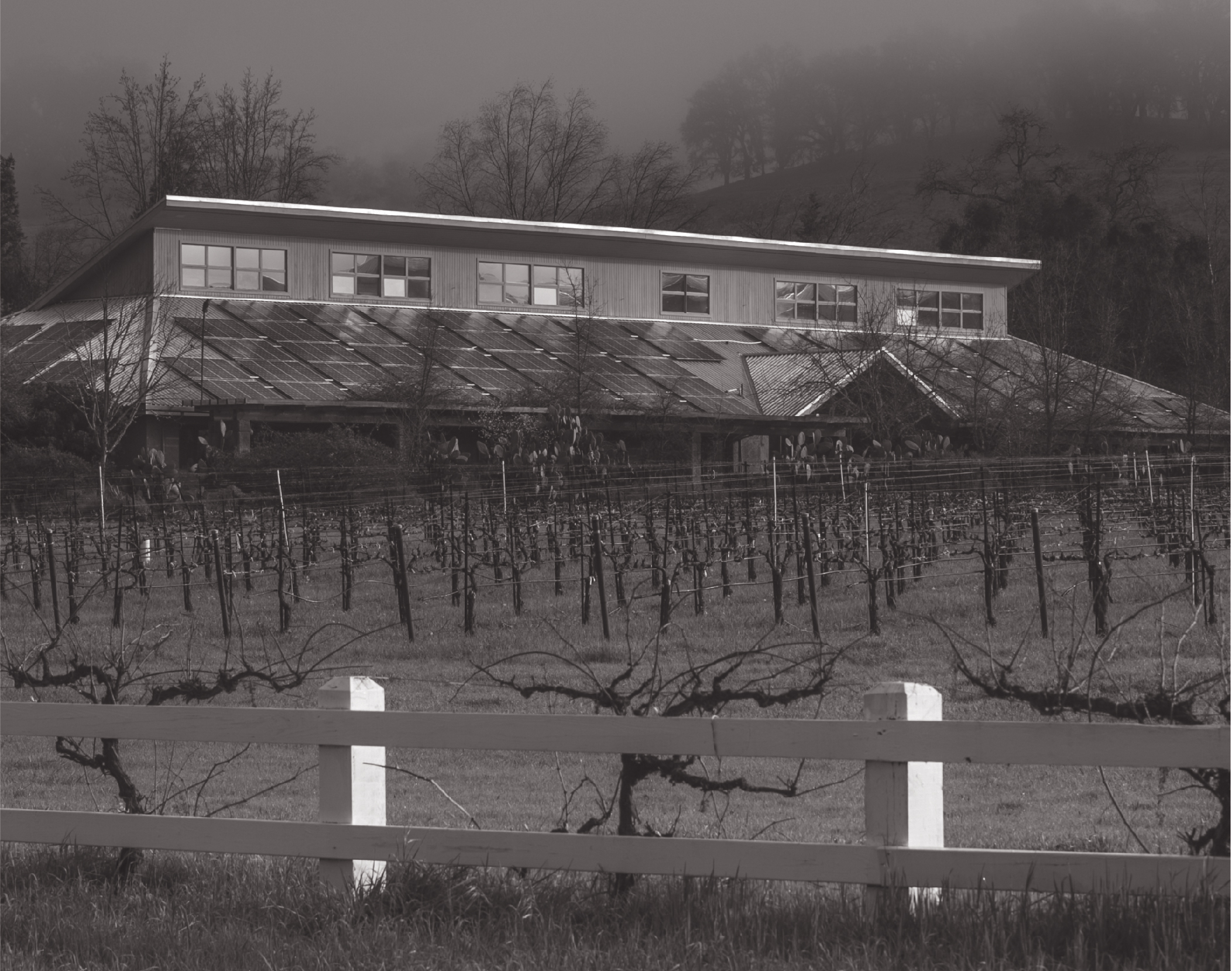 Fetzer Vineyards recently celebrated numerous milestones, including a Momentum for Change award from the United Nations. Photo: George Rose