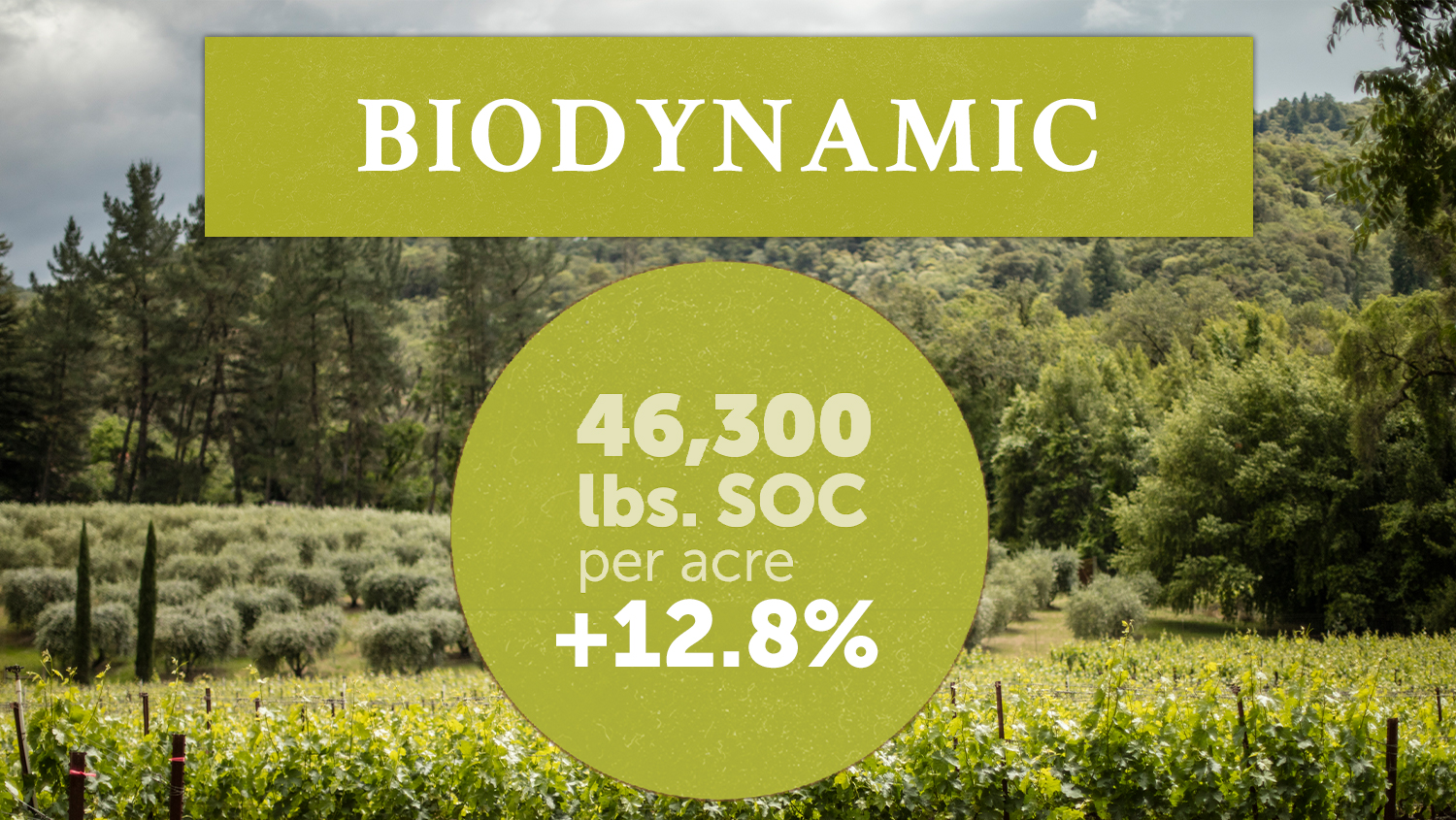 Biodynamic vineyards studied held 12.8% more SOC. Greater soil resilience leads to plant resilience--and a vineyard that more effectively reintegrates atmospheric CO2.