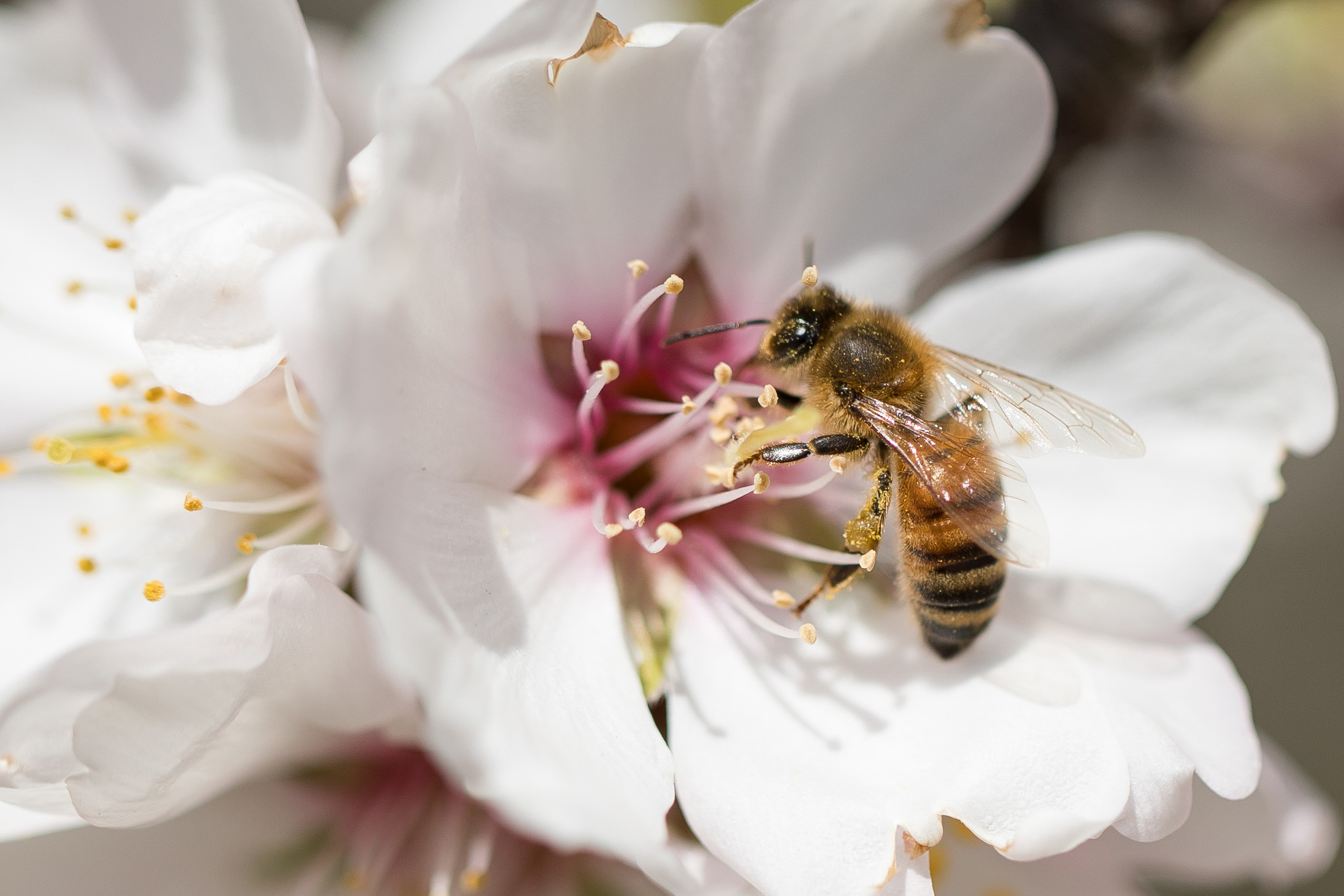 The Häagen-Dazs® Brand Celebrates 10 Years of Support Dedicated to its Hardest Workers - the Bees