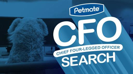 Ad with a dog staring at a computer screen with the Petmate CFO Search logo.