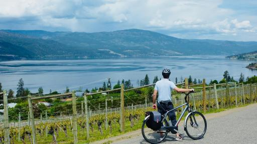 A man stands by his bike overlooking a vineyard and a lake.