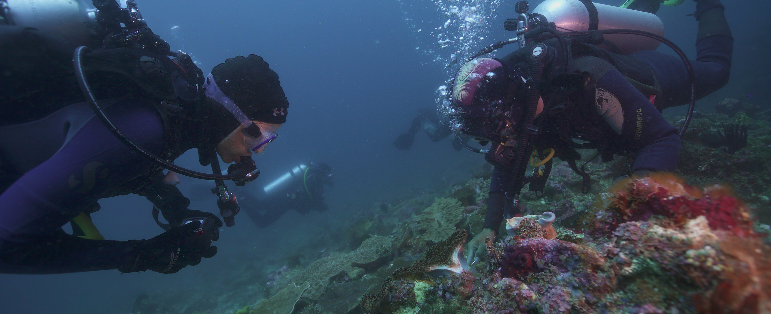 Three people scuba diving near a coral reef