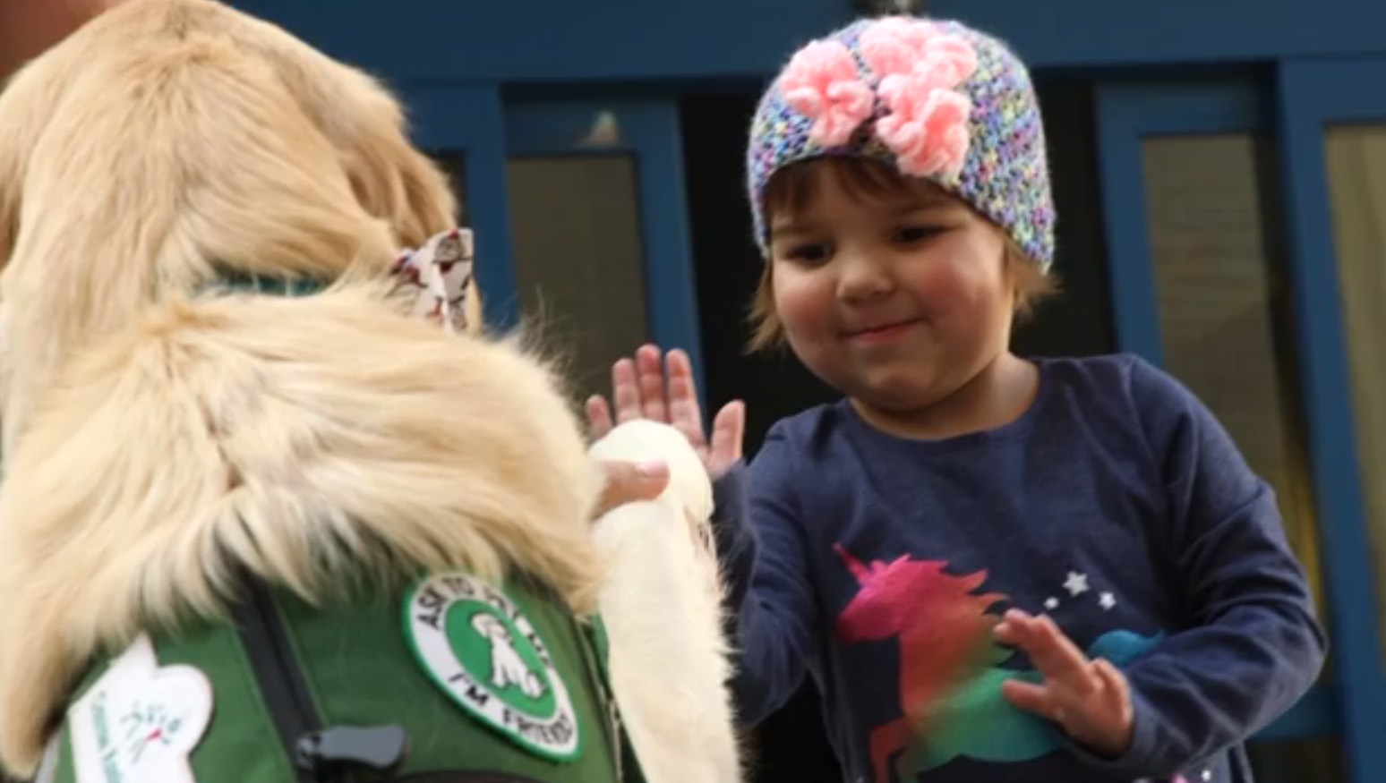 Background on facility dogs and their impact from our partners at Cook Children's Hospital and Canine Assistance.