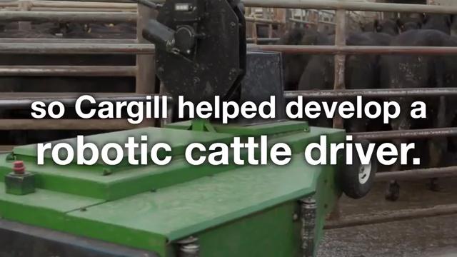 Robotic Cattle Driver