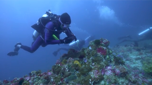 Fisk Johnson, CEO and Chairman of SC Johnson, dives off the coast of Indonesia.