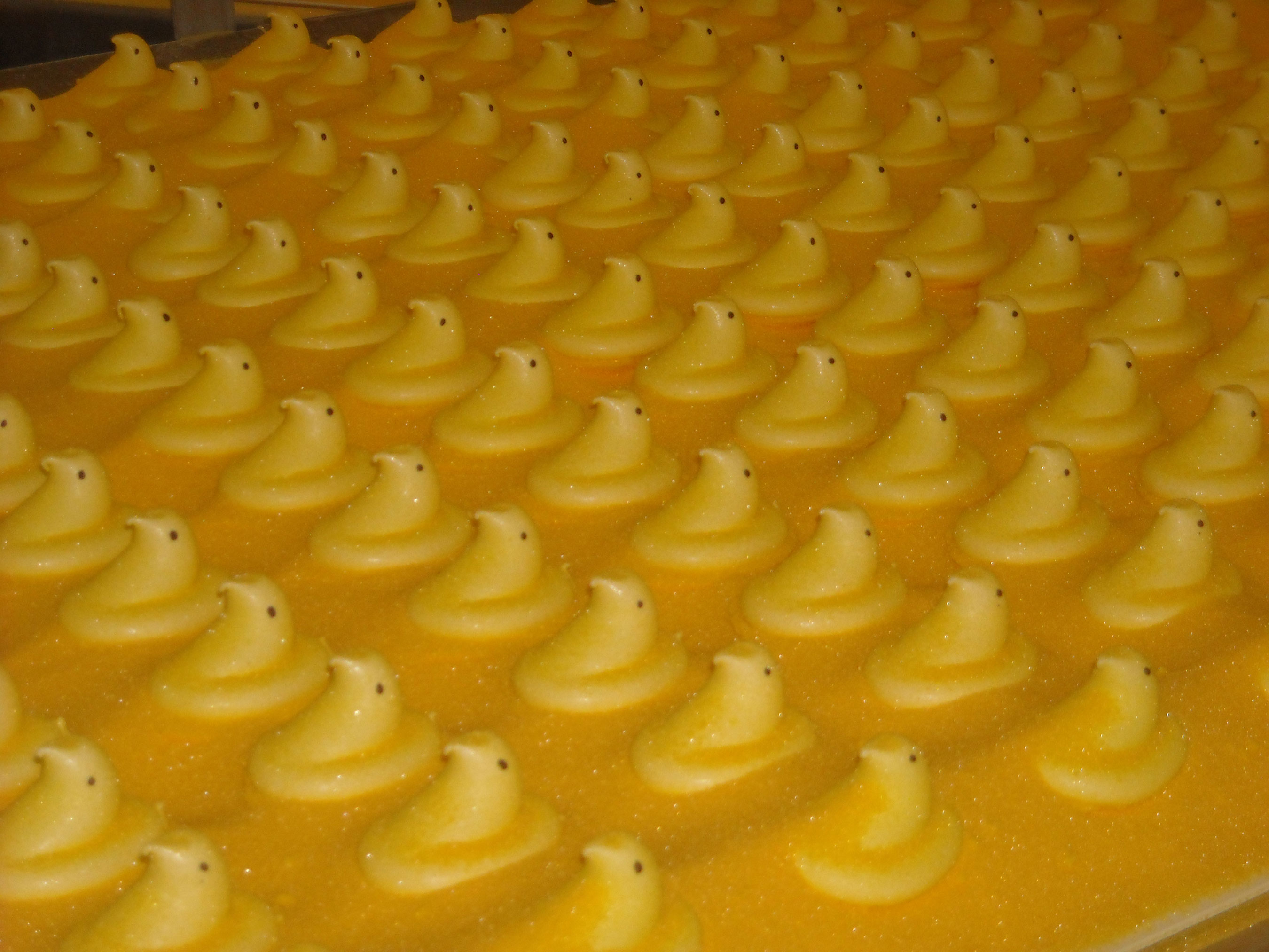 Yellow PEEPS® Chicks on conveyor belt at PEEPS® Factory in Bethlehem, PA