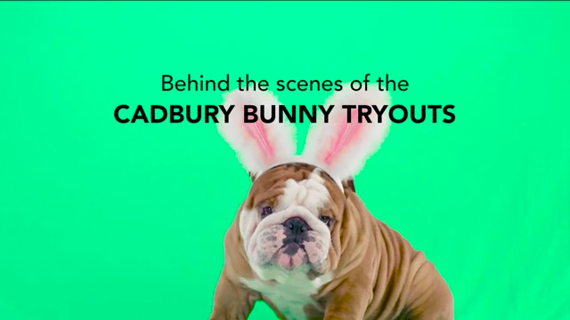 Cadbury Brand Releases Its Easter Commercial Featuring Contest Winner Henri The Bulldog