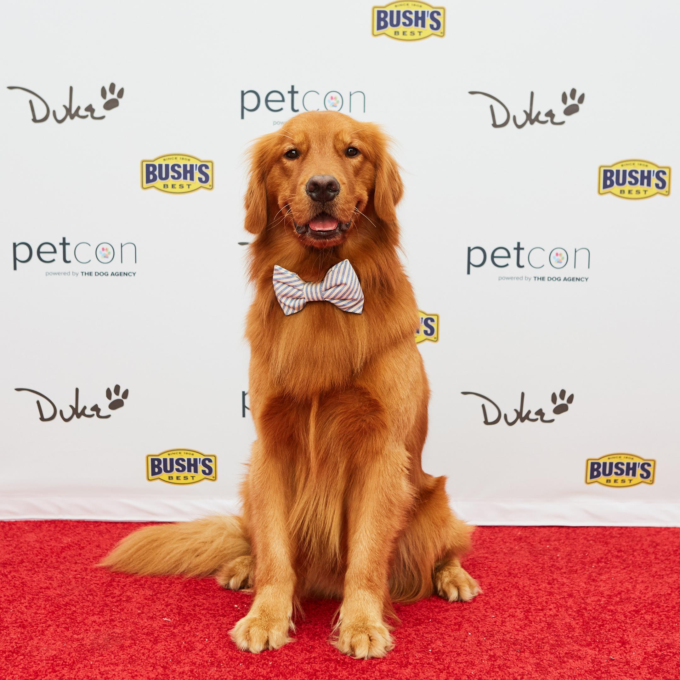 Bush S 174 Spokes Dog Duke Launches Instagram At Petcon Los