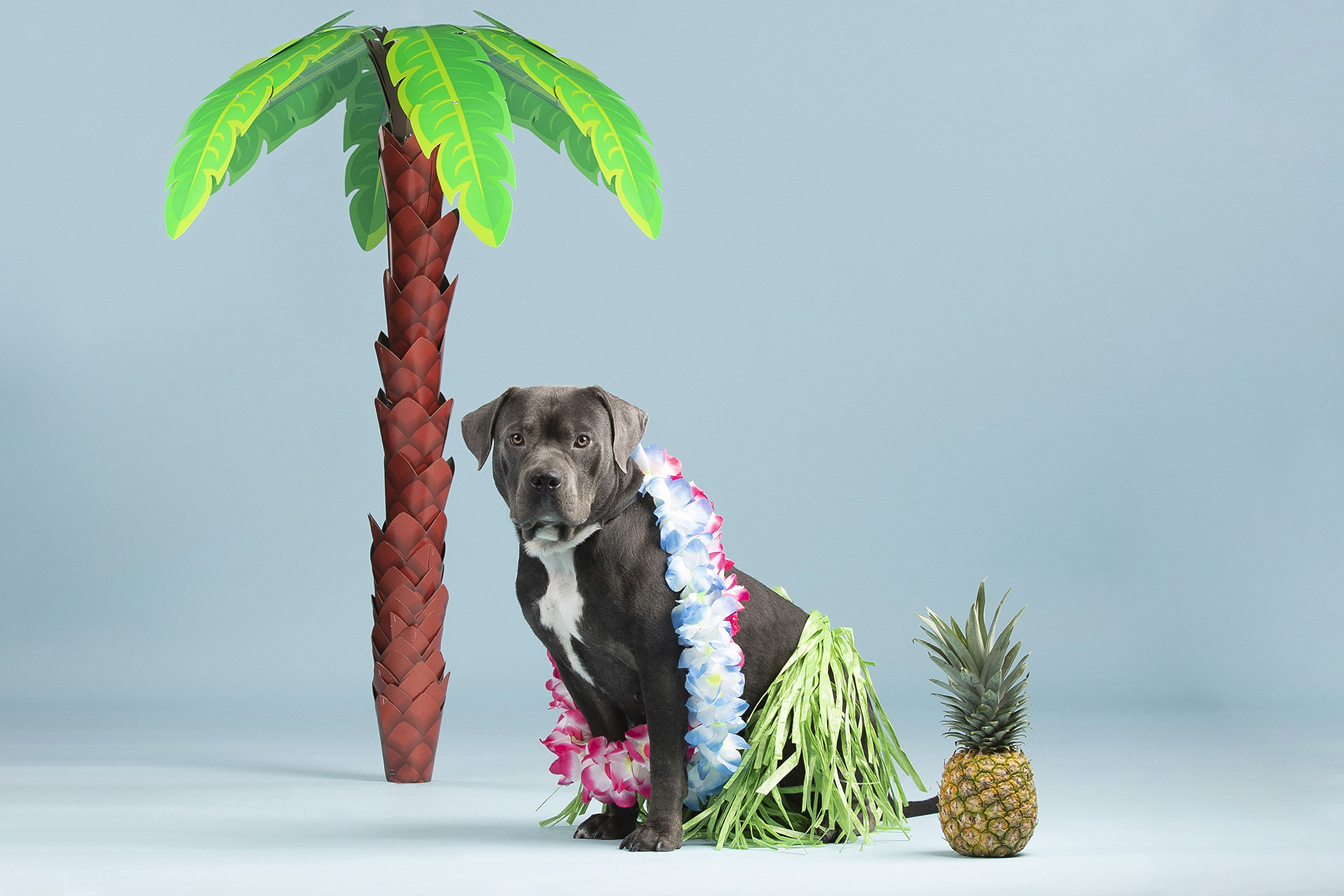 Say aloha to Nina the tiki pup