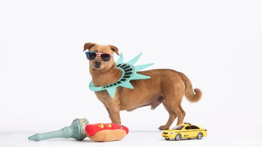 Let's Go! Expedia Celebrates the Dog Days of Summer with Big Travel