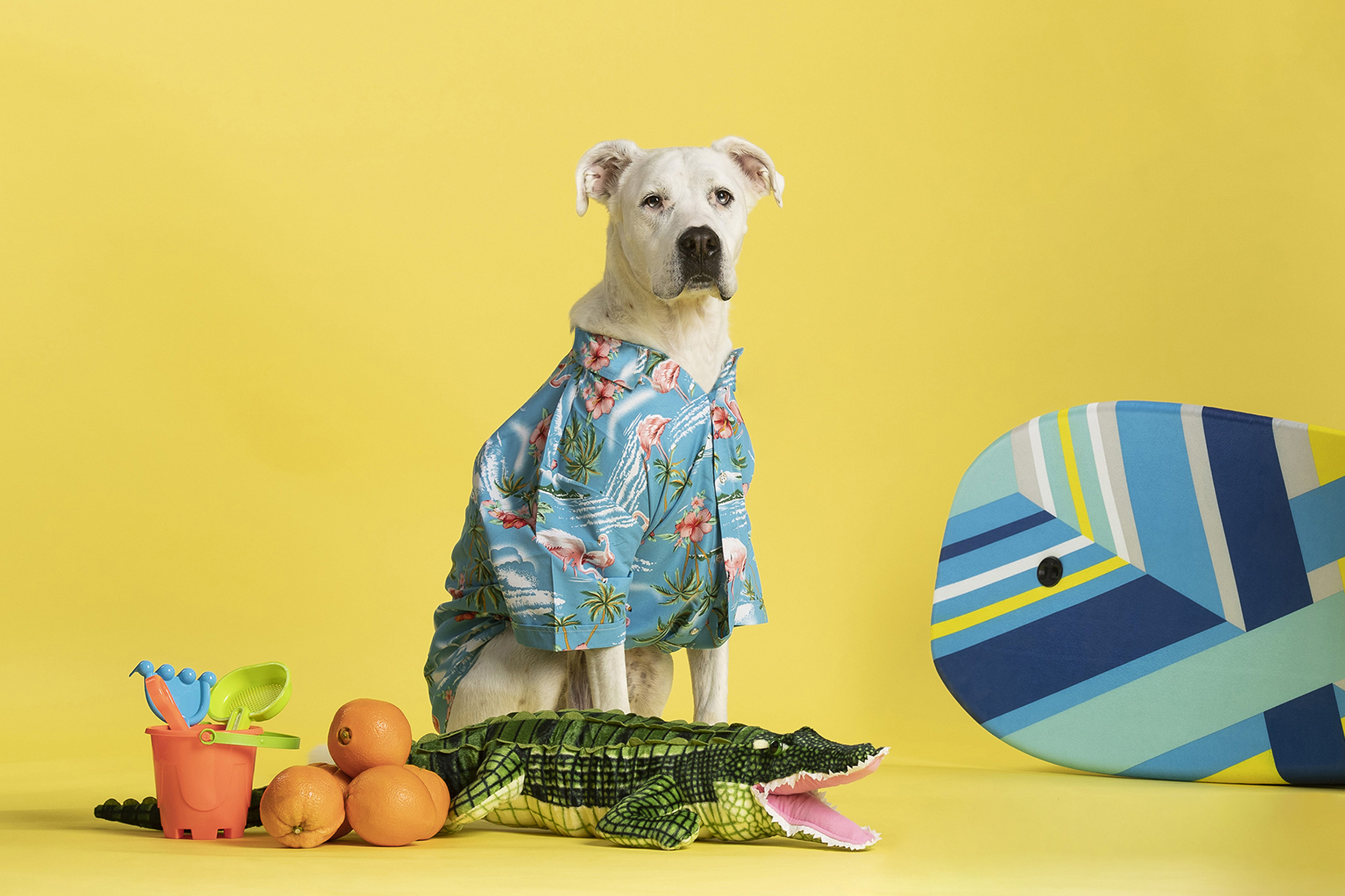 Let's Go! Expedia Celebrates the Dog Days of Summer with Big
