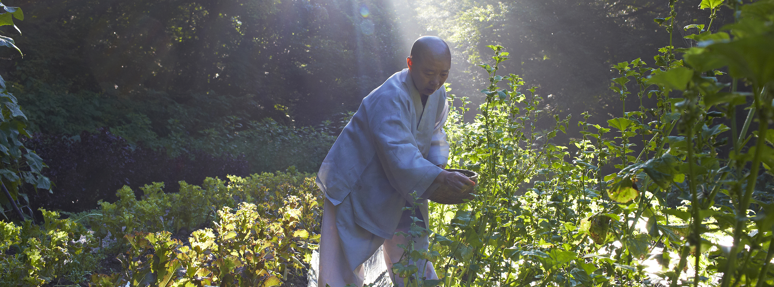 Banner image of a monk in a garden
