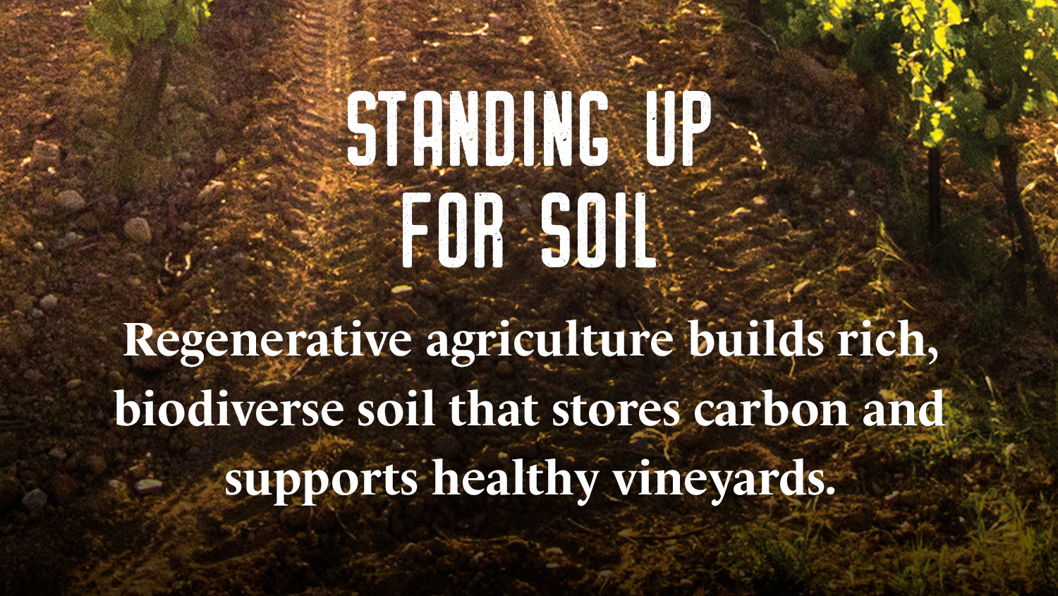 Mapping the Road shares insights to our pioneering regenerative agriculture study, conducted by Bonterra, which indicates that regeneratively farmed vineyards hold more soil organic carbon underground.