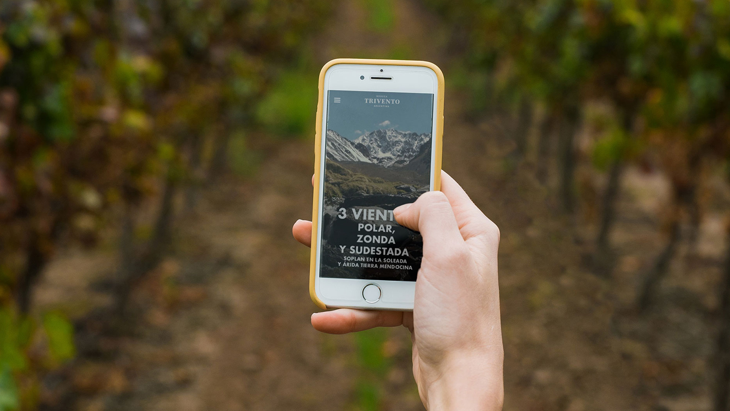 Building on the 2019 debut of its virtual winery tour, Trivento recently added a multimedia stop among the vines, featuring the Trivento winemaking team.
