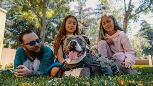 "David, a Marine veteran is seen here with his daughters Sadie and Alathea alongside his service dog, Katie, a Staffordshire terrier mix who was rescued after being hit by a car. David graduated from Tony La Russa's Animal Rescue Foundation (ARF) Pets and Vets program, which is partnering with Purina Dog Chow for its second annual ""Service Dog Salute"" campaign."