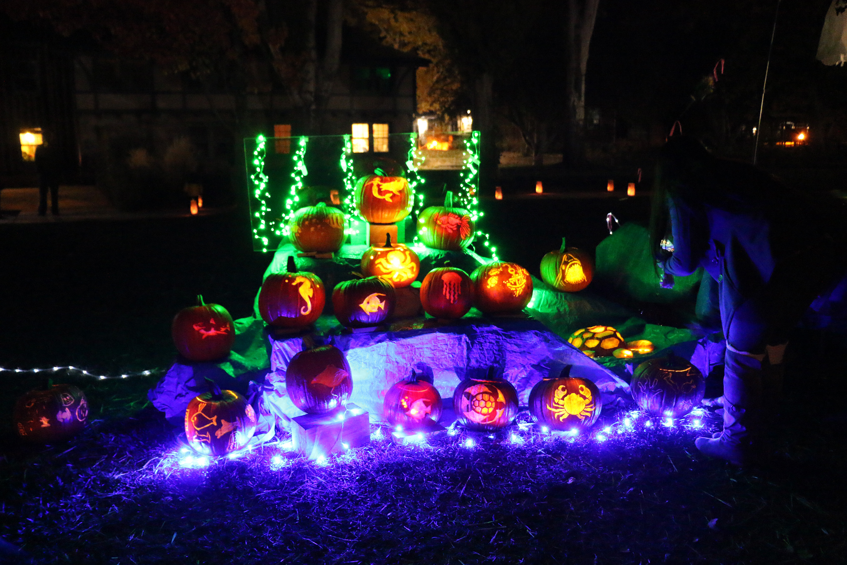 Residents of Los Alamos will proudly display their carved pumpkins, using Pumpkin Masters tools, later that evening in the Los Alamos Arts Council's annual Pumpkin Glow event. Photo credit: Lauren McDaniel