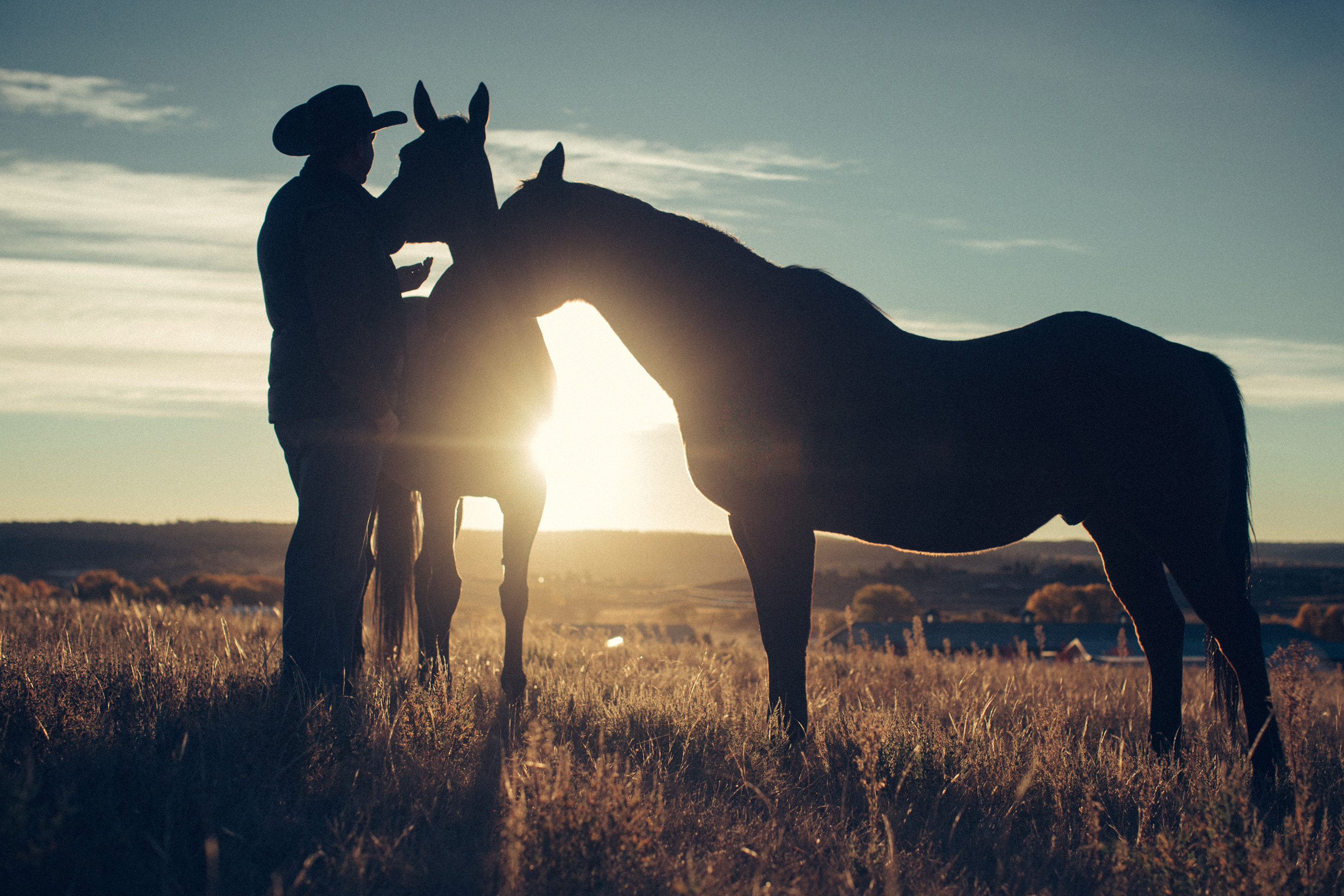 Ready to find your #righthorse? Visit MyRightHorse.org for more information.