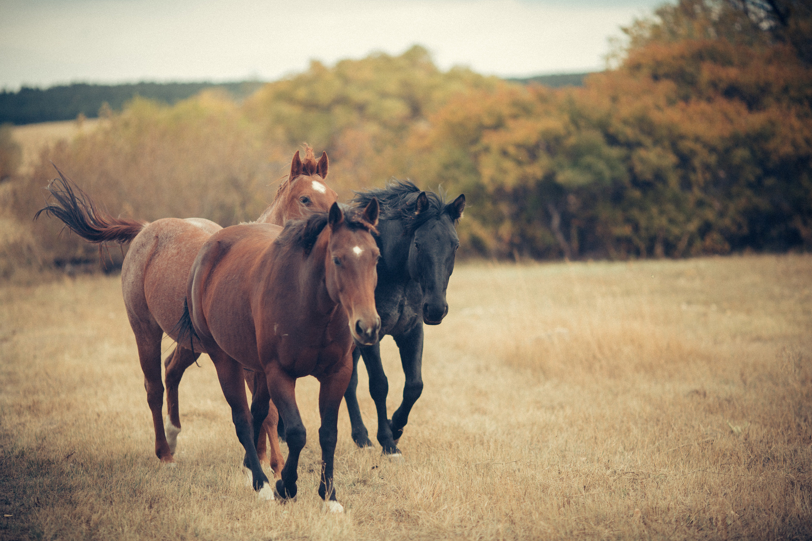Not ready to foster or adopt just yet? Visit MyRightHorse.org and share adoptable horses with your community to help connect the #righthorse to the right person and bring awareness to equine adoption.