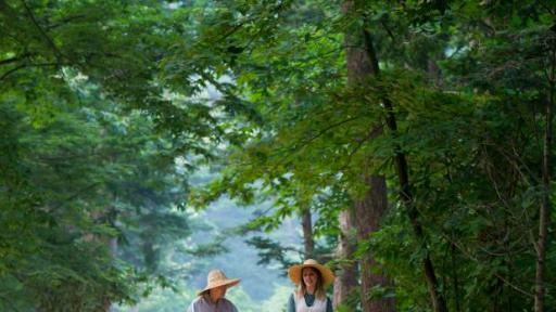 A monk and Templestay participant walk through the summer forest