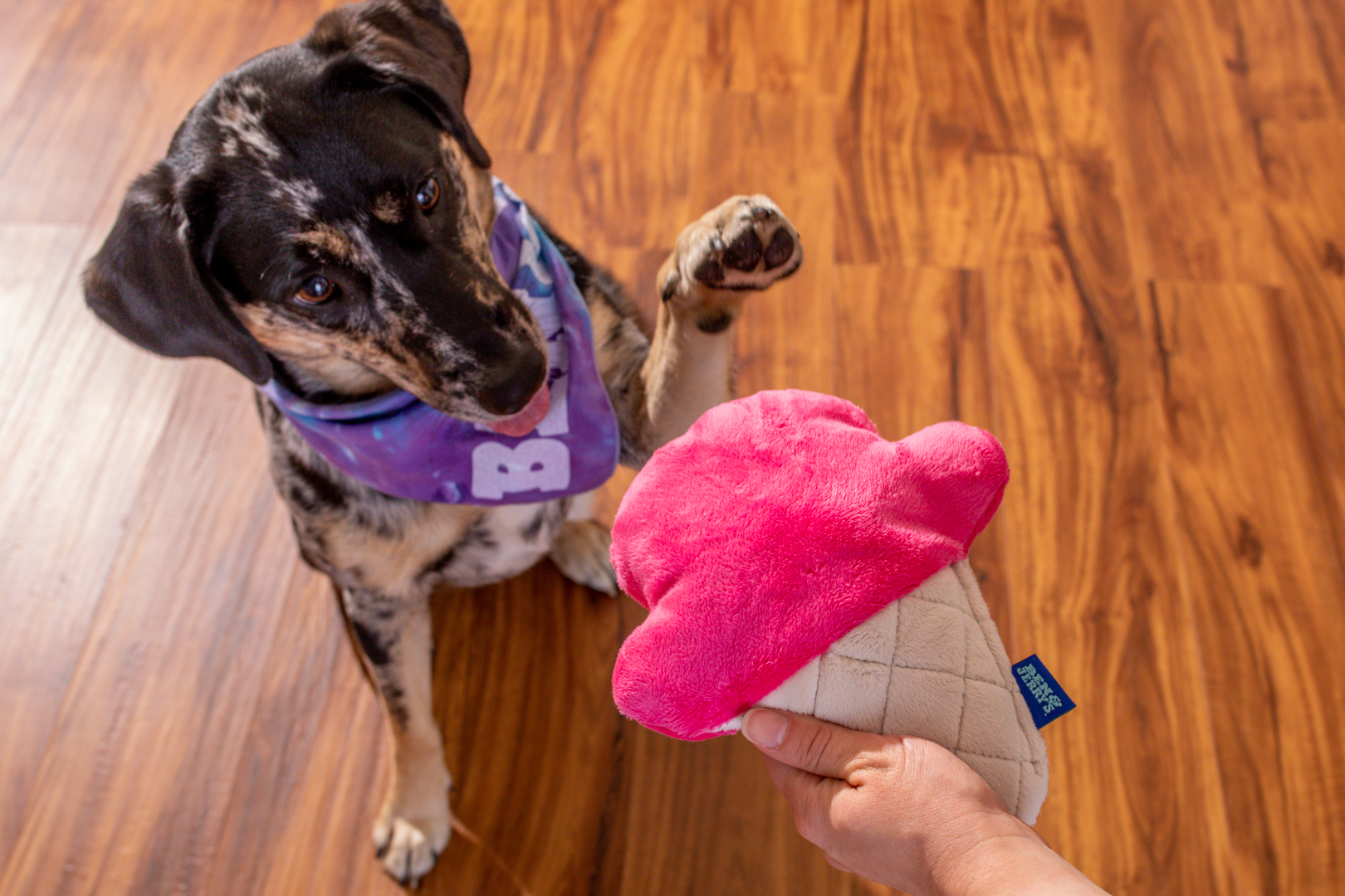 Ben & Jerry's has partnered with like-minded suppliers to offer pet accessories like this plush cone toy stuffed with recycled fill. Limited quantities are available at www.store.benjerry.com