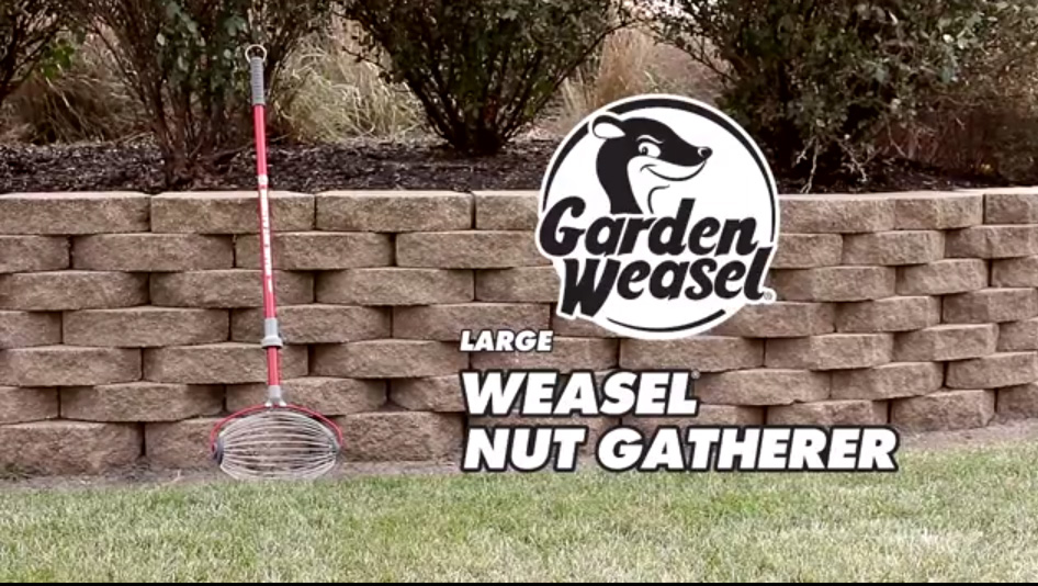Weasel Nut Gatherer