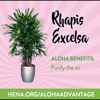 Experience the many benefits with Aloha at Home.