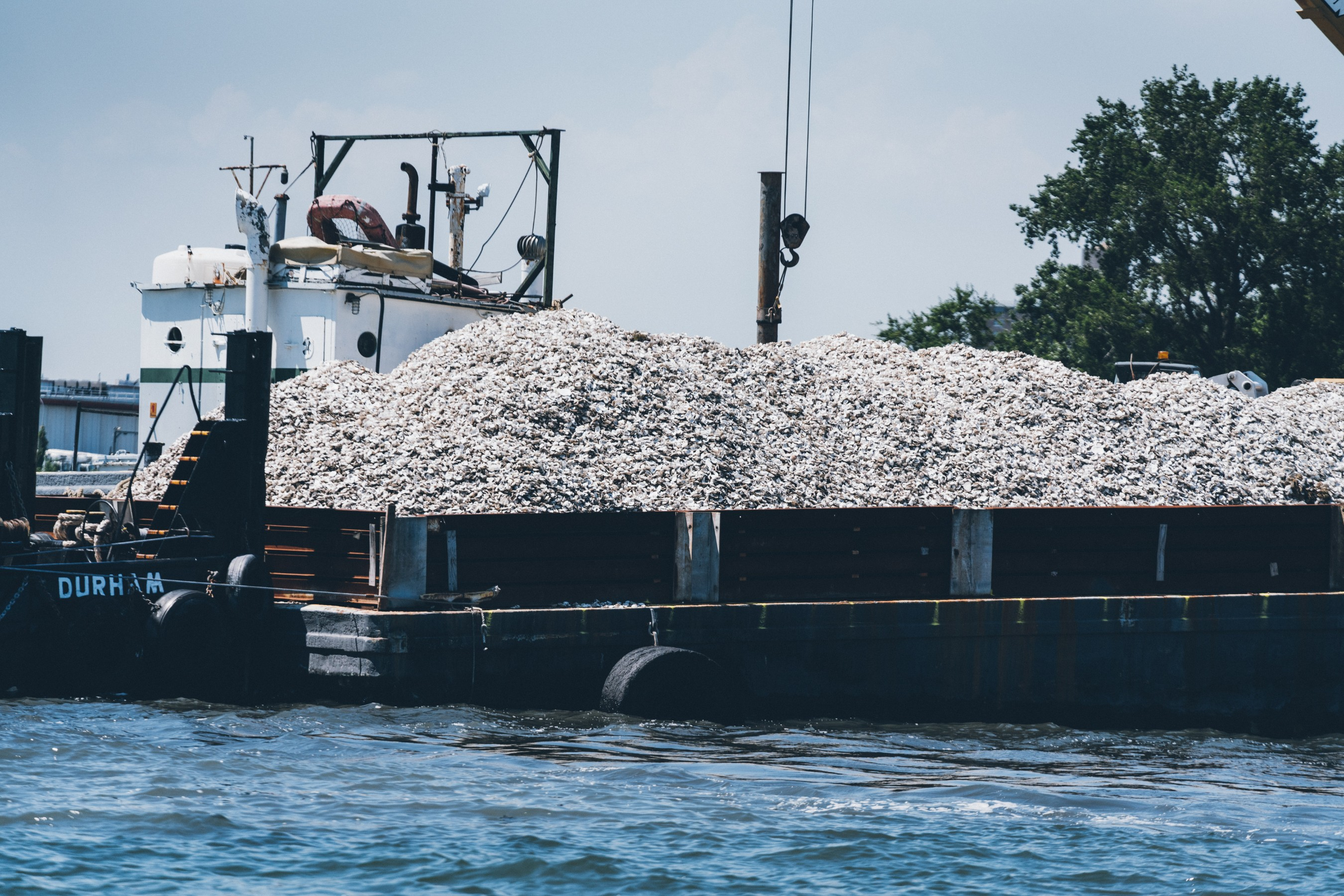This year, Billion Oyster Project's Shell Collection Program – with Talisker's support - plans to divert approximately 200,000 pounds of oyster shells. #ShuckFromHome. Photo Credit: Jose Silva