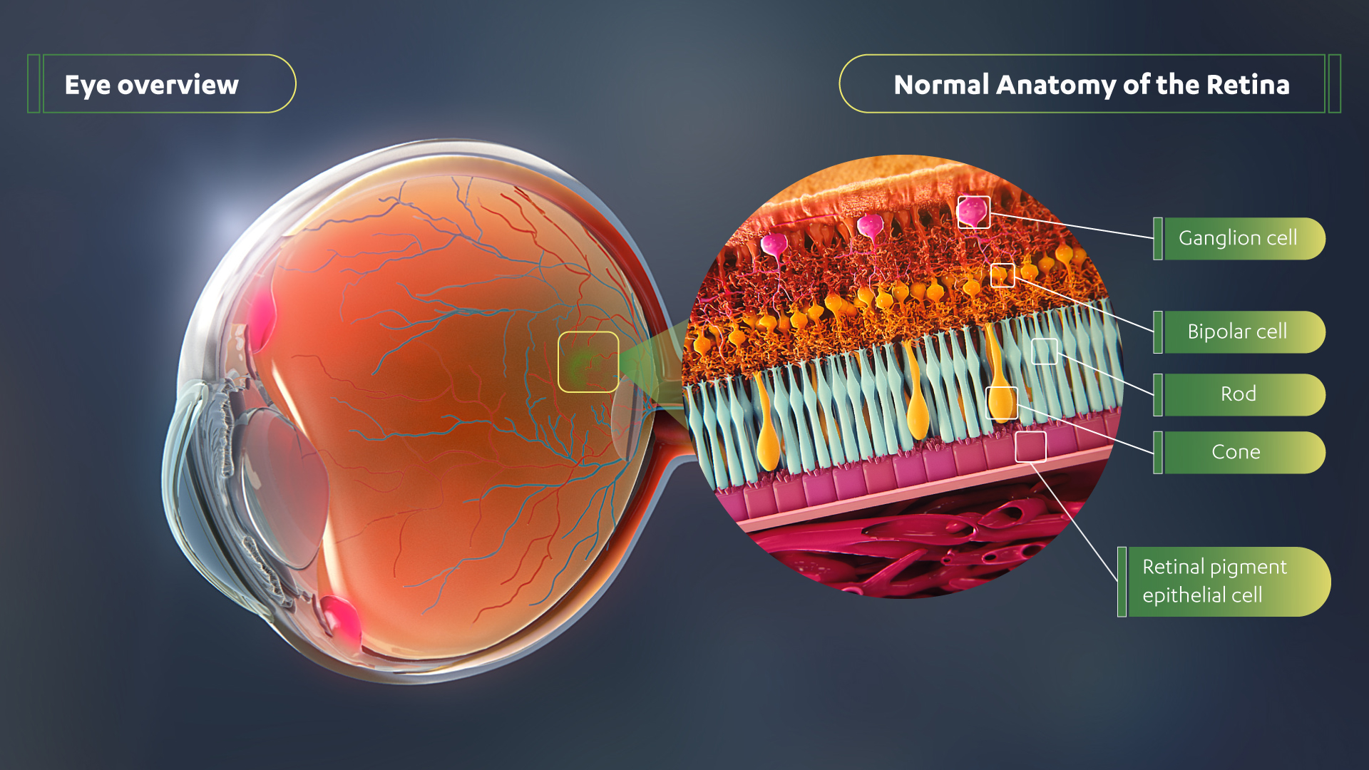 Eye Retina Overview