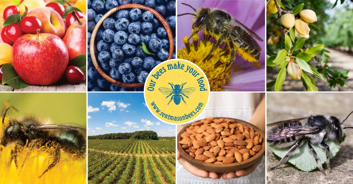 Our bees make your food