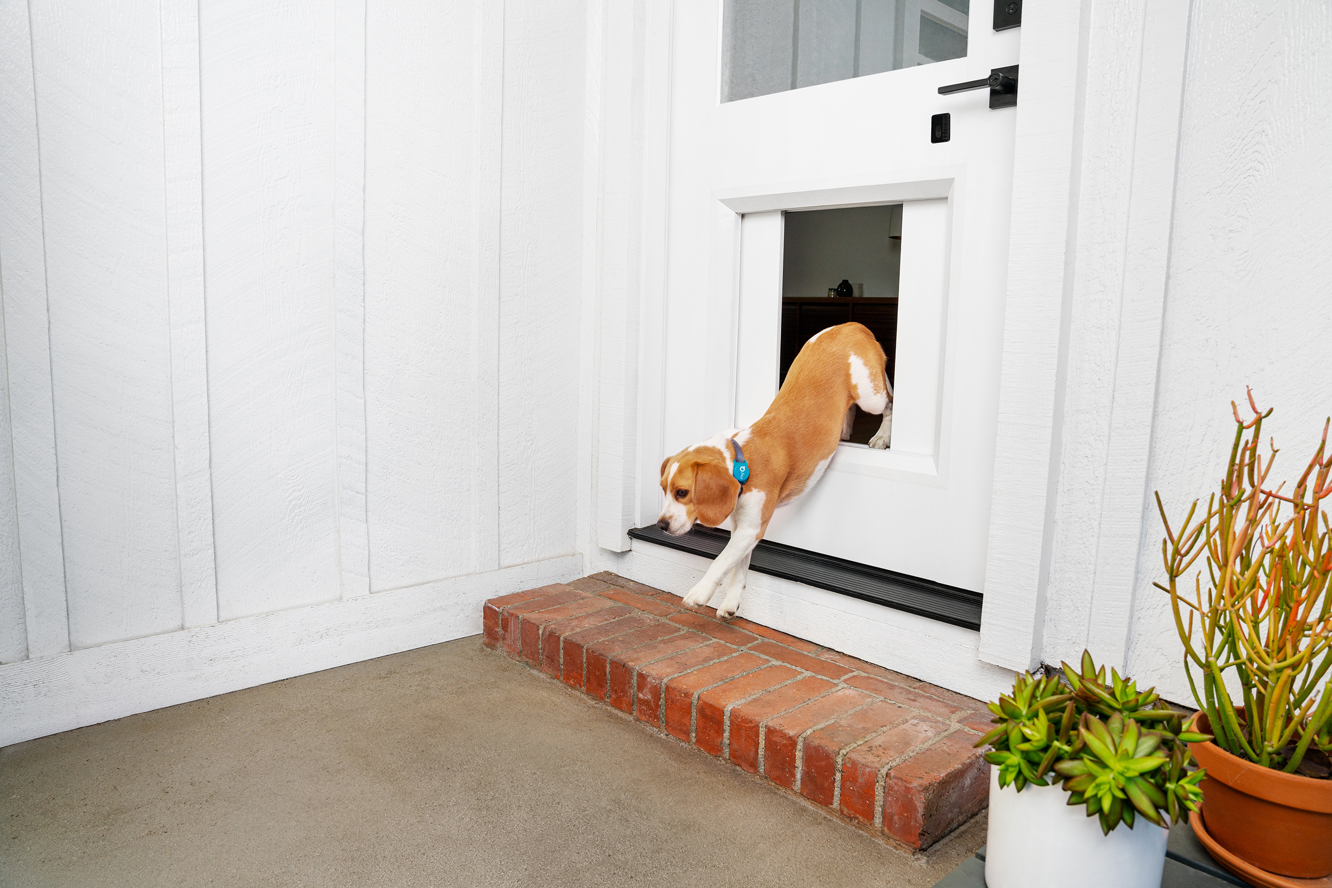 Safely let your pet out to potty and play when you're not home.