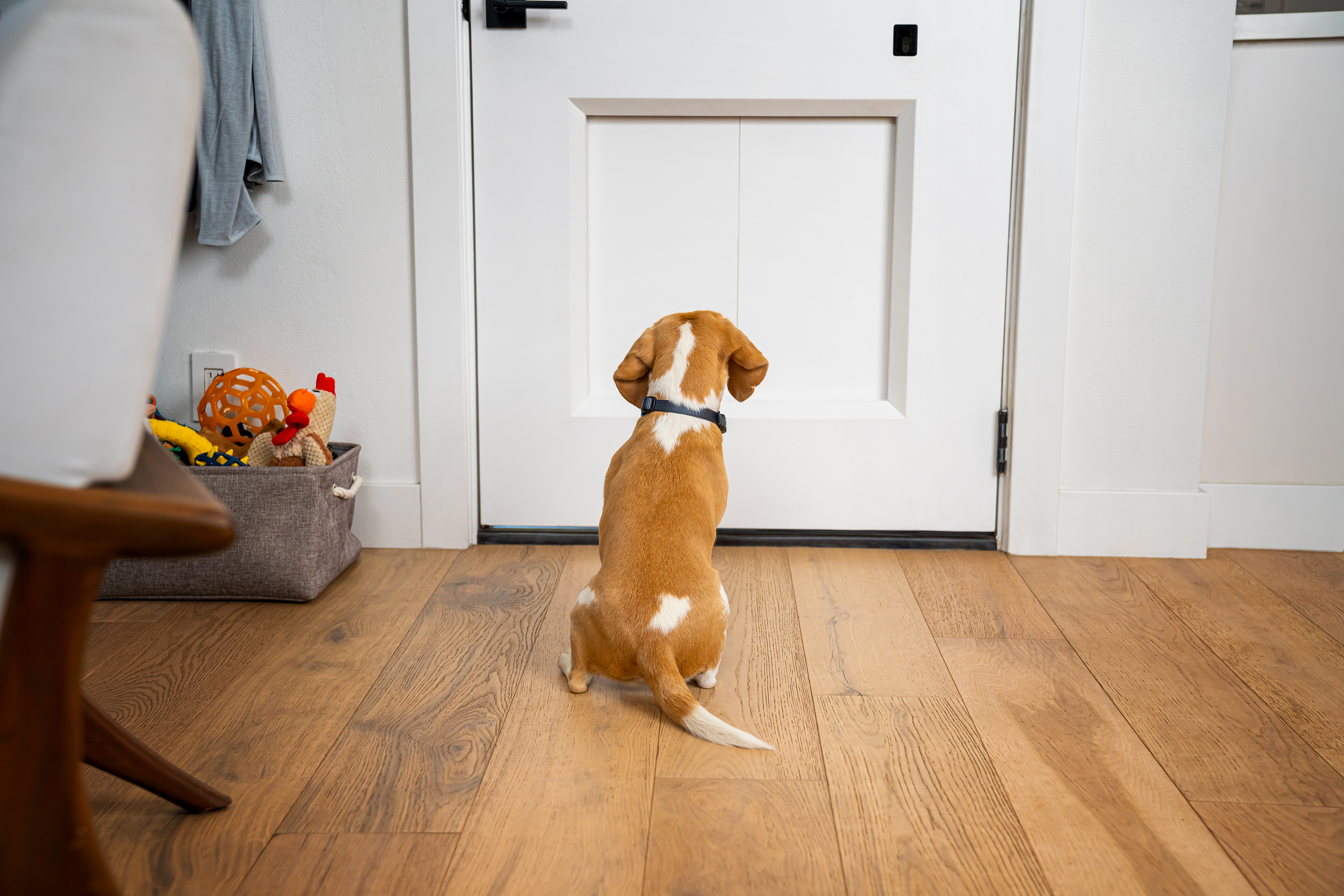 Designed to replace an existing exterior door, the myQ Pet Portal comes integrated in a select offering of Kolbe doors.