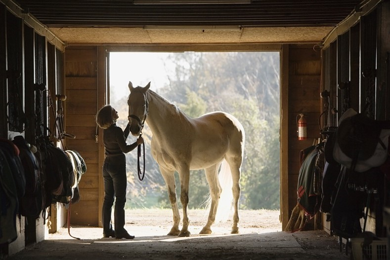 Synchrony financial solution, CareCredit, gives horse owners a new way to pay for care and provides equine veterinarians the ability to collect payment for services any time and from any location.
