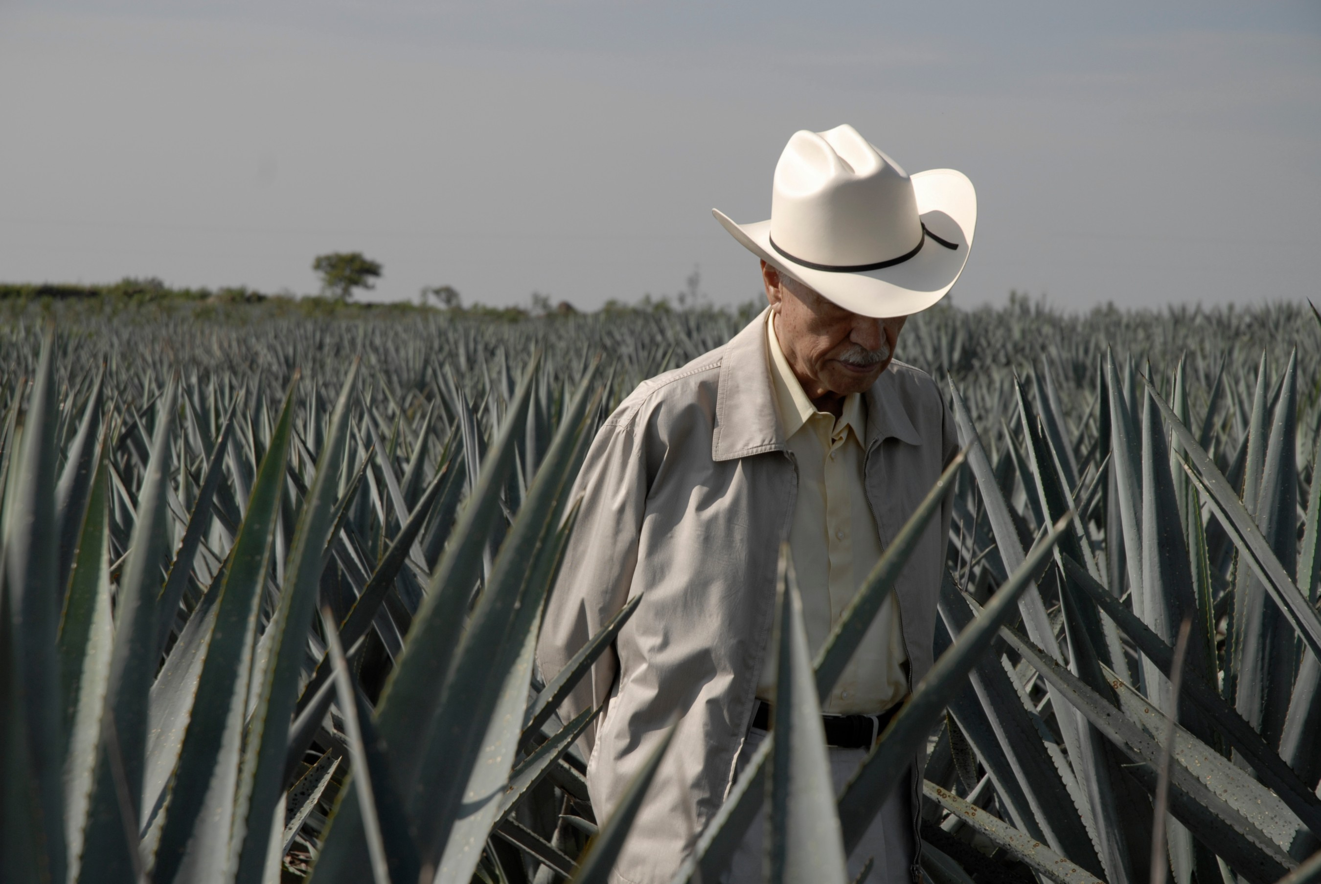 Applications Open: The Tequila Don Julio Fund Is Offering Up To...